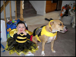 Teela the Bee